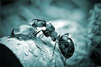 Среда обитания муравьев